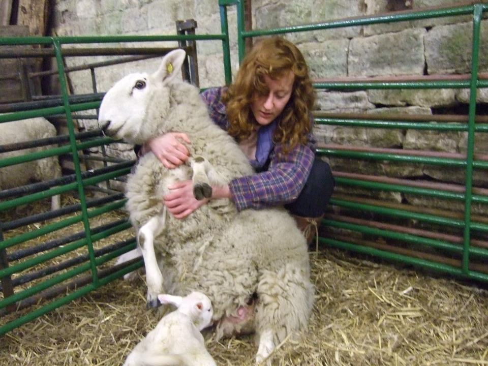 dot mccarthy and her sheelp